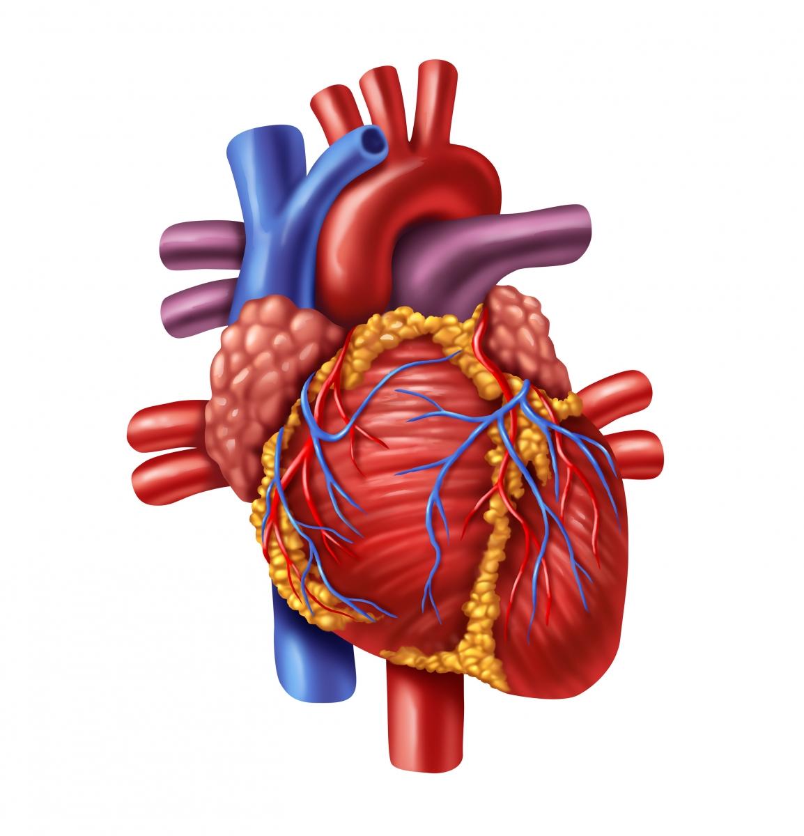 Aorttaläppä Leikkauksesta Toipuminen
